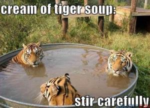 TigerSoup