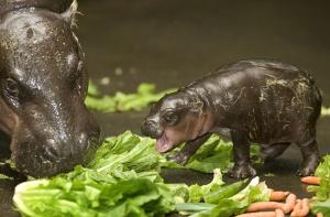 cute-baby-animals-20